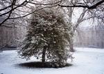 バースアカデミー 雪の木